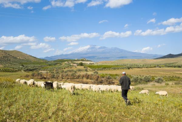 Shepherd and Flock