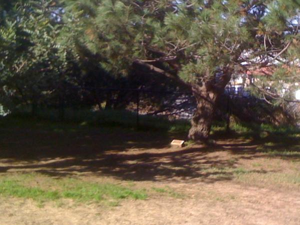 Memorial Tree in El Segundo Dog Park