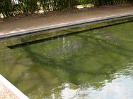 Shelf in the Pool