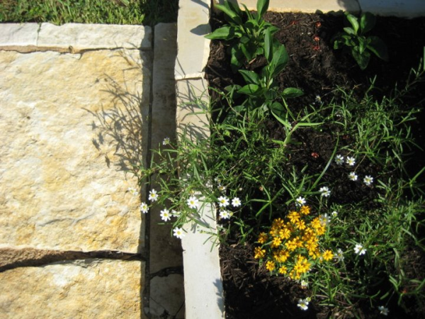 Sustainable Water Solutions - Native and Drought Resistant Landscaping