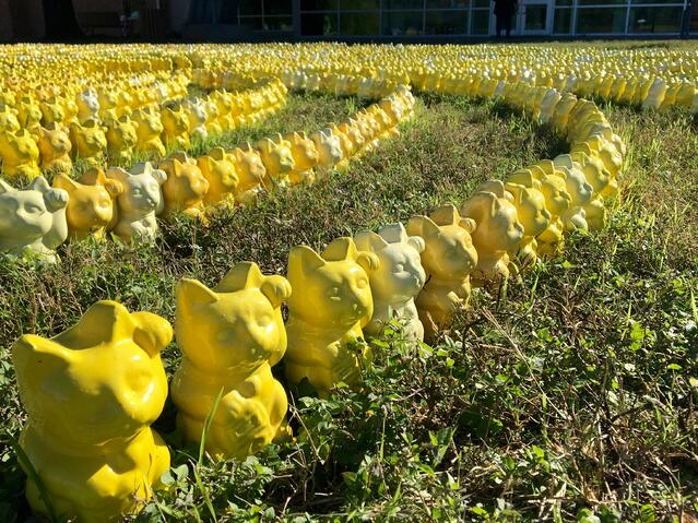 Yellow Cats for TEMPO.jpg
