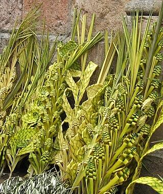Palms_in_Ecuador.jpg