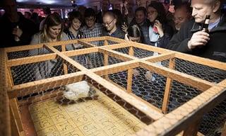 ginnys_w_chicken.jpg