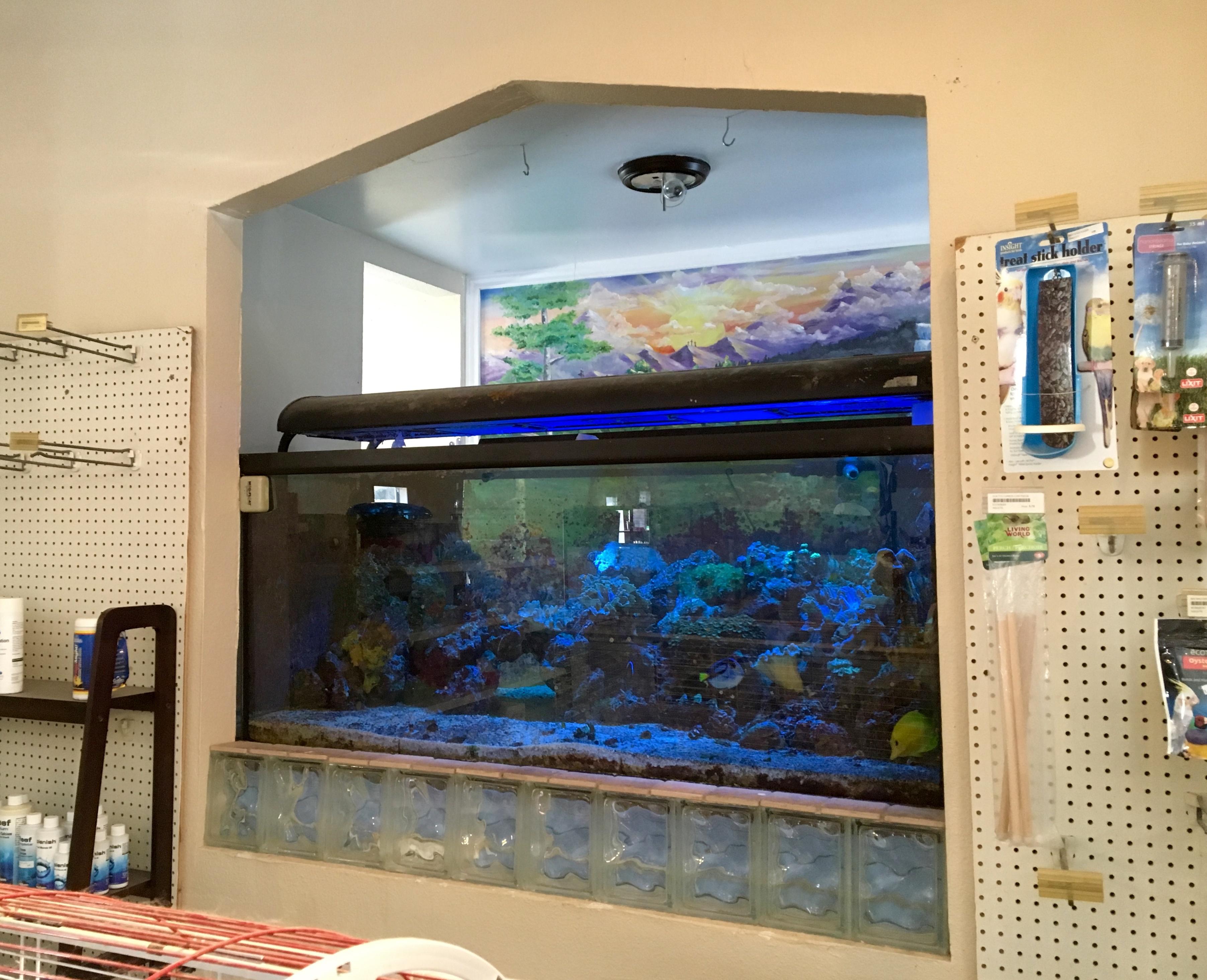 Baptistry_Becomes_a_Fish_Tank.jpg